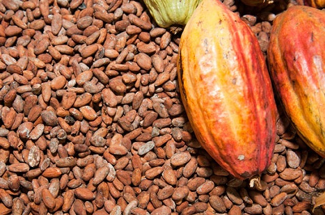 COCOBOD assures drop in cocoa prices will not affect Ghana