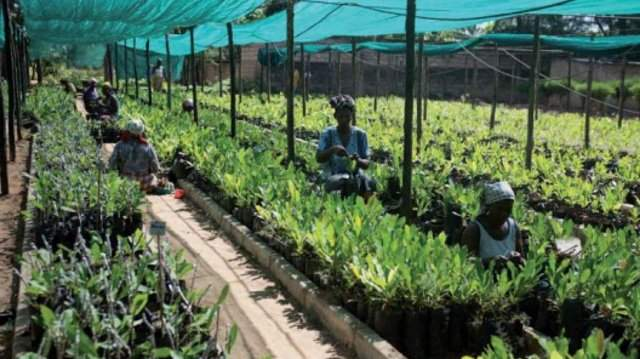 Agriculture Fast Track Fund to launch 17 new projects