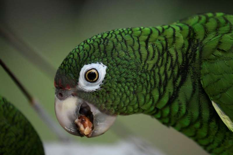 Parrot in police custody for trying to warn drug dealers of raid