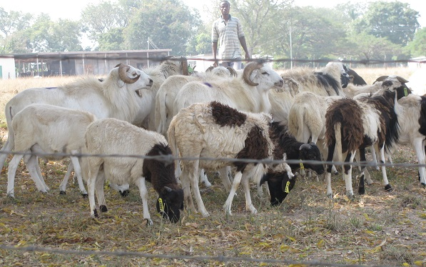 Do not kill deformed animals for Sallah - Cleric warns
