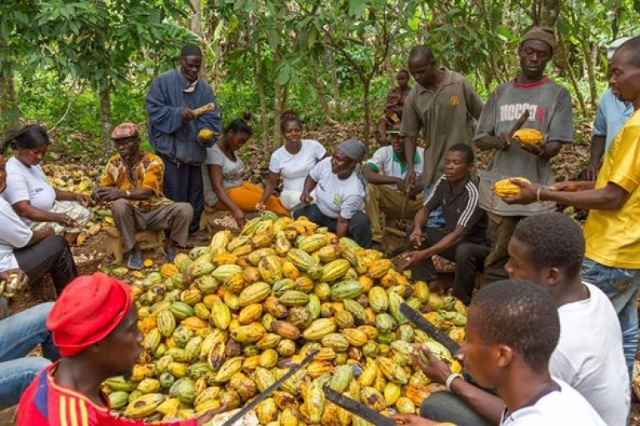 I feel sad for cocoa farmers in Ghana - Mahama